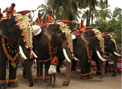 kerala elephants share special bonds with culture