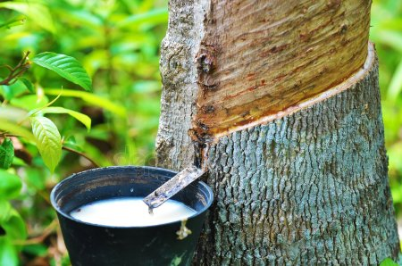 nature facts, rubber production hub