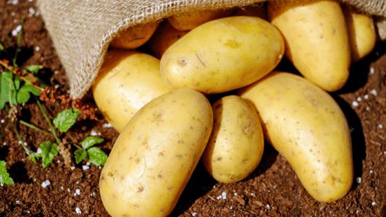 bonnotte potatoes