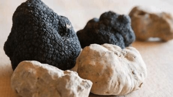 black and white truffles, worlds most expensive foods