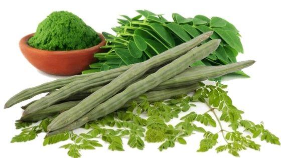 benefits of moringa leaves and powder
