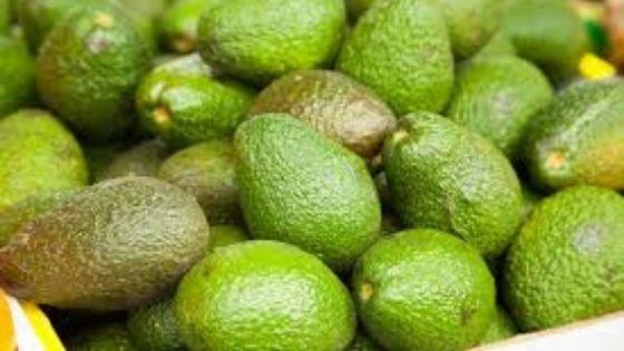 benefits of raw avocado